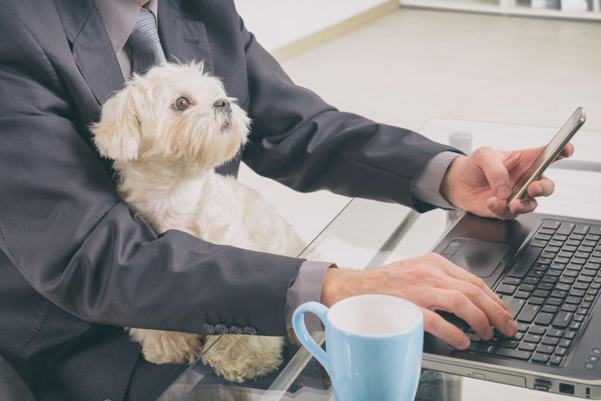 راه اندازی کسب و کار شخصی با ارائه آنلاین خدمات برای حیوانات خانگی   پرگاس